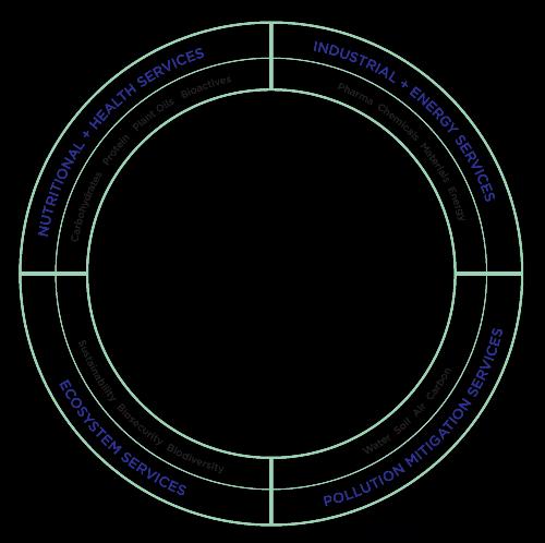 Holistic Bioeconomy Framework